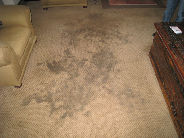 Carpet Cleaning Stain Treatment And Removal Services